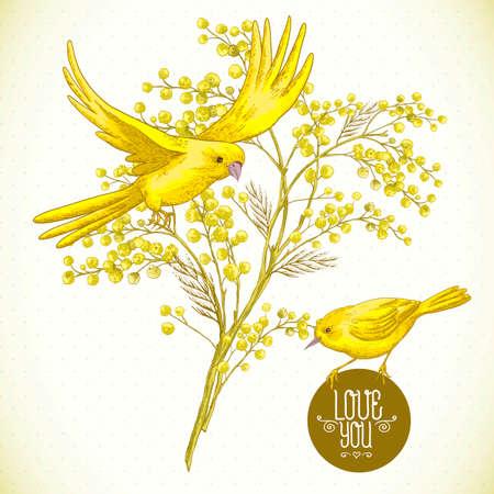 ミモザと黄色の鳥、春背景の小枝  イラスト・ベクター素材