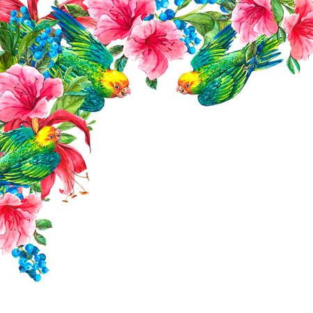 loros verdes: Acuarela Exotic Tarjeta de la vendimia con las bayas azules, flores rosadas tropicales y loros verdes, acuarela Ilustraci�n Foto de archivo