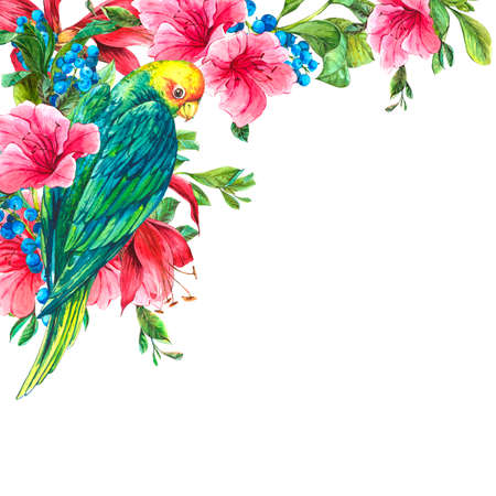 loros verdes: Acuarela Tarjeta de la vendimia ex�tica con bayas azules, flores rosadas tropicales y los loros verdes, ejemplo de la acuarela