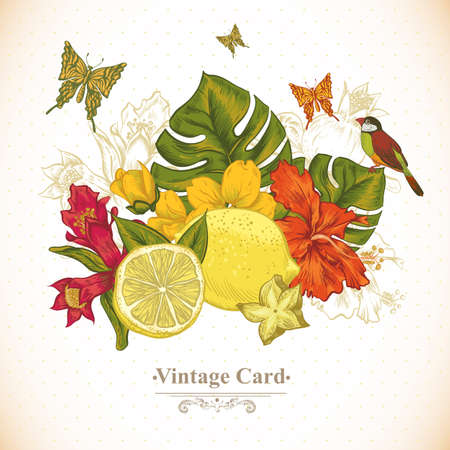 birds of paradise: Vintage Greeting Card Tropical Fruit, Flowers, Butterfly and Birds, Vector Illustration. Lemon and Hibiscus Illustration
