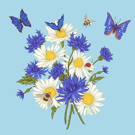 pâquerette: Summer Bouquet floral vintage. Carte de voeux avec Blooming camomille Ladybird Marguerites Bleuets Bumblebee Abeille et papillons bleus. Vecteur