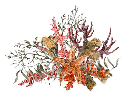 ぼろぼろ夏ヴィンテージ水彩画海生活グリーティング カード海藻ヒトデやサンゴ、水中の水彩イラスト。