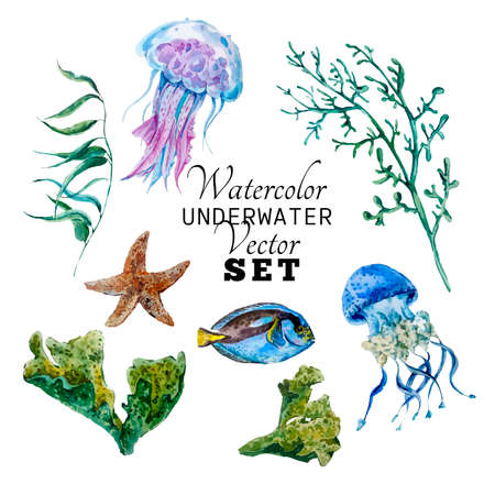 marine aquarium: Marine set of Watercolor Vector Tropical Fish, Seaweed Coral Algae and Jellyfish Underwater Watercolor Vector illustration Illustration