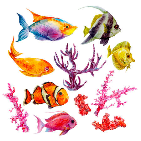 Marine set of Watercolor Vector Tropical Fish, Seaweed Coral Algae and Jellyfish Underwater Watercolor Vector illustration Illustration