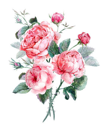 english: Classical vintage floral greeting card, watercolor bouquet of English roses, beautiful watercolor illustration Stock Photo