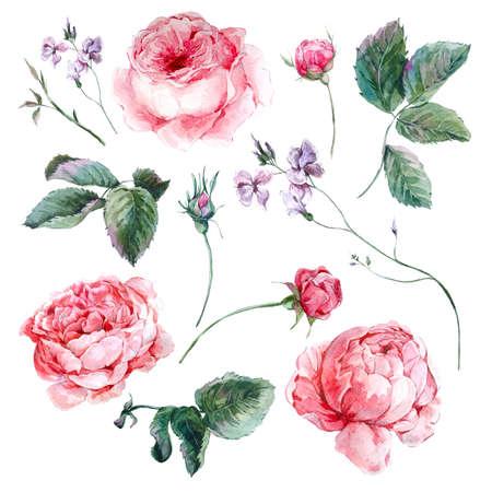 borde de flores: Establecer ramo acuarela del vintage de rosas deja ramas flores y flores silvestres, ejemplo de la acuarela aisladas sobre fondo blanco