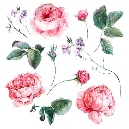 rose bouquet: Set vintage watercolor bouquet of roses leaves branches flowers and wildflowers, watercolor illustration isolated on white background