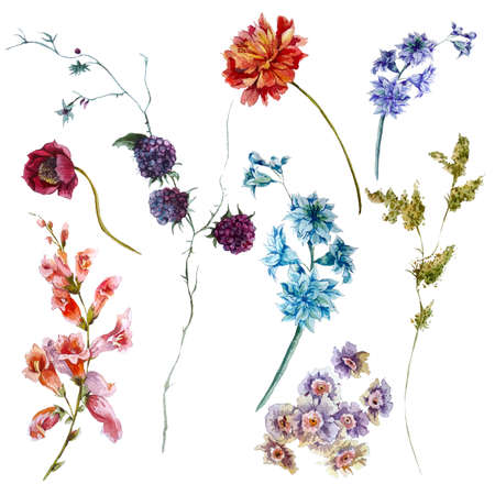 Set of watercolor wildflowers, sprigs of leaves separately flower, isolated watercolor illustration