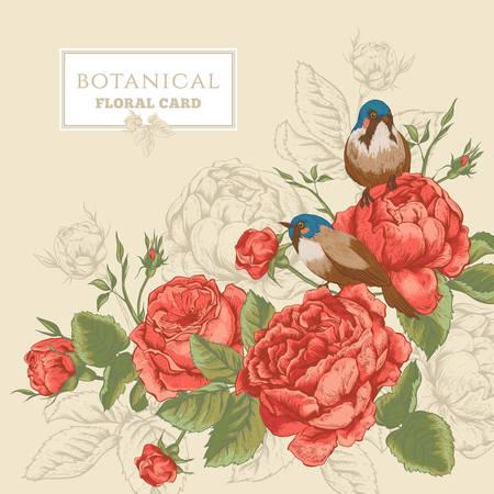 Tarjeta floral botánico en el estilo vintage con flores rosas inglesas y aves, ilustración vectorial