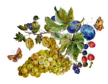 festival of the grape harvest: Autumn harvest watercolor vintage card with fruits and butterflies. Grapes Plum BlackBerry Strawberry Gooseberry. Botanical watercolor illustration Stock Photo