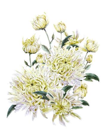 Vintage waterverf Bloemen kaart met chrysanten. Illustratie van de waterverf