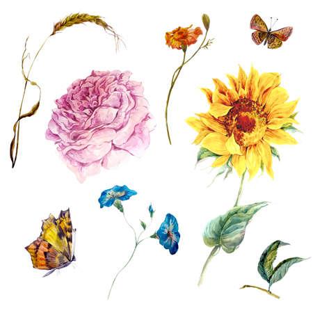 빈티지 수채화 해바라기의 집합 야생화와 나비 가지 꽃 봉오리 잎 장미, 수채화 그림 흰색 배경에 고립