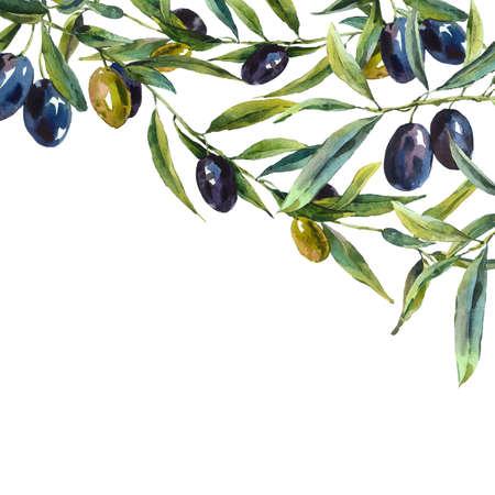 올리브 나무의 가지와 수채화 인사말 카드, 식물 그림 스톡 콘텐츠