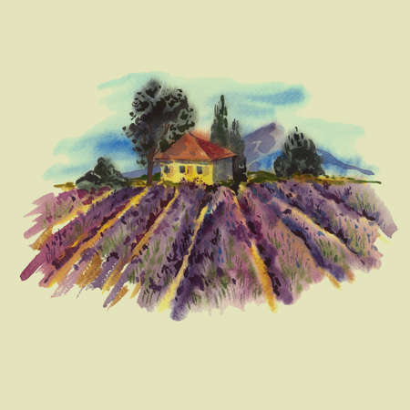 tuscan: Watercolor landscape with blooming violet lavender field