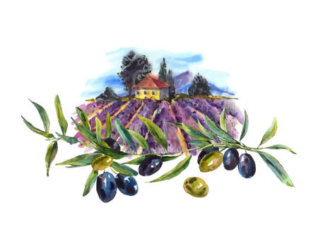 olive: Watercolor greeting card with blooming violet lavender and olives Stock Photo