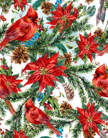 poinsettia: Watercolor Christmas vintage floral seamless pattern with blue berries, poinsettia, feathers and bird red cardinal. Botanical watercolor illustration