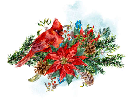 Watercolor Christmas vintage floral greeting card with blue berries, poinsettia, feathers and bird red cardinal. Botanical watercolor illustration