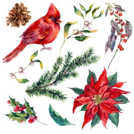 Establecer elementos de la vendimia de la acuarela de Navidad de acebo, poinsettia, piña, rama de abeto y rojo cardenal pájaro, ejemplo de la acuarela aislado en el fondo blanco