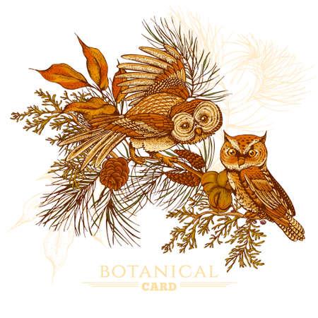 pomme de pin: Forêt carte de voeux vintage avec des hiboux, des branches de sapin et pommes de pin, illustration vectorielle