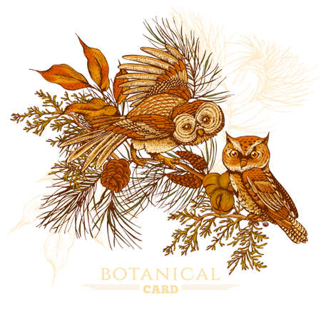 cone: Forest vintage greeting card with owls, spruce branches and fir cones, vector illustration