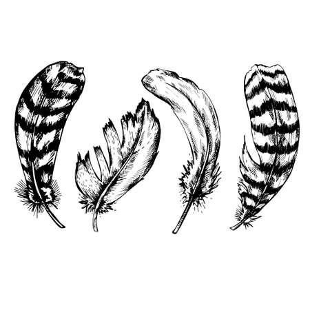 white feather: Conjunto de pluma de la vendimia en blanco y negro sobre fondo blanco. Dibujado a mano ilustración vectorial.