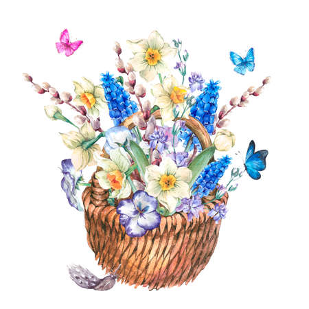 pansies: Beautiful spring bouquet with daffodils, violets, pussy-willow, pansies, muscari and butterflies in the wicker, vintage watercolor illustration Stock Photo