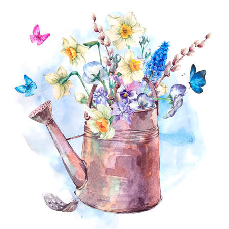 violets: Beautiful spring bouquet with daffodils, violets, pussy-willow, pansies, muscari and butterflies in the garden iron watering can, vintage watercolor illustration