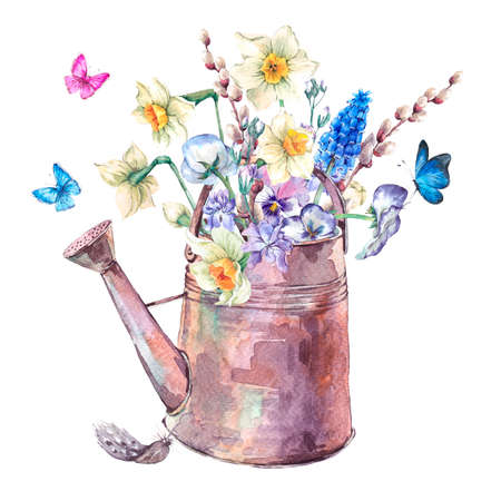 can: Beautiful spring bouquet with daffodils, violets, pussy-willow, pansies, muscari and butterflies in the garden iron watering can, vintage watercolor illustration