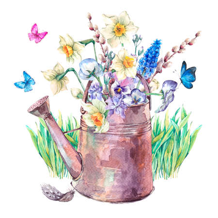 pansies: Beautiful spring bouquet with daffodils, violets, pussy-willow, pansies, muscari and butterflies in the garden iron watering can, vintage watercolor illustration