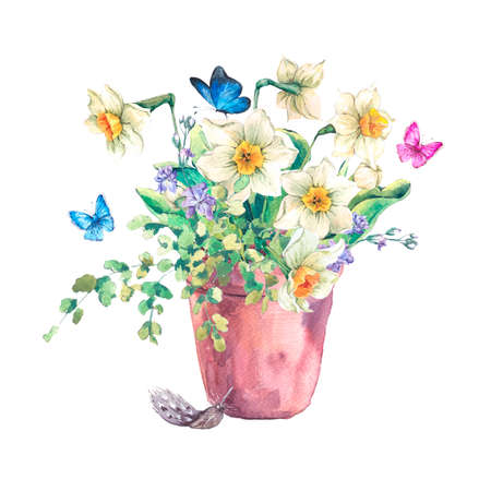 daffodil: Watercolor Garden Spring bouquet in flower pots, daffodil and butterflies, botanical vintage watercolor illustration isolated on a white background Stock Photo