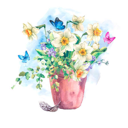 garden flowers: Watercolor Garden Spring bouquet in flower pots, daffodil and butterflies, botanical vintage watercolor illustration isolated on a white background Stock Photo