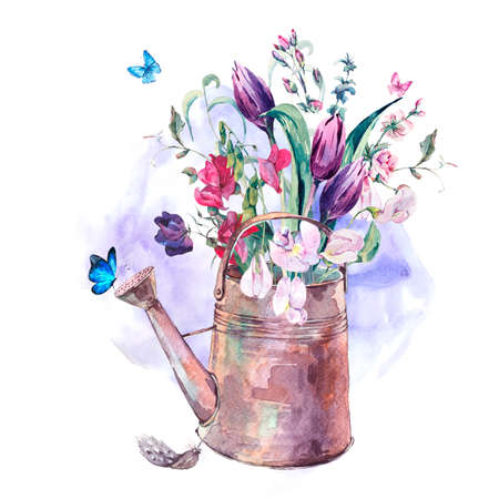 botanical illustration: Watercolor Spring Greeting Card, Vintage bouquet  with Sweet Peas, Tulips and Butterflies in the garden iron watering can, botanical illustration Stock Photo