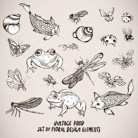 Conjunto de elementos vectoriales animales de agua de estanque en blanco y negro vintage, botánico mal estado caracol elegante rana ilustración, la carpa cáscara libélula, mariposa, mariquita mosca hormiga