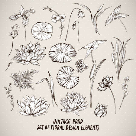 pond water: Set of monochrome vintage pond water flowers vector elements, Botanical shabby chic illustration reeds, lily, iris, wildflowers leaves and twigs.