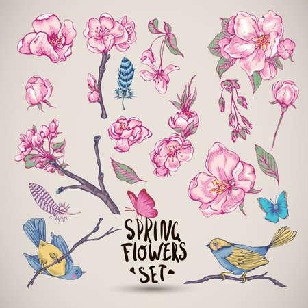 fleur cerisier: Ensemble d'éléments Spring Nature, brins feuilles séparément fleur, rose branches de floraison de cerise, pêche, poire, sakura, pommiers plumes d'oiseaux et de papillons, vecteur isolé illustration botanique
