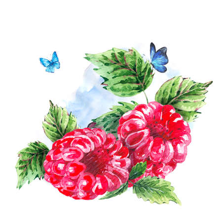 raspberry: Hand painting summer watercolor raspberries, nature eco greeting card on white background. Botanical berries illustration
