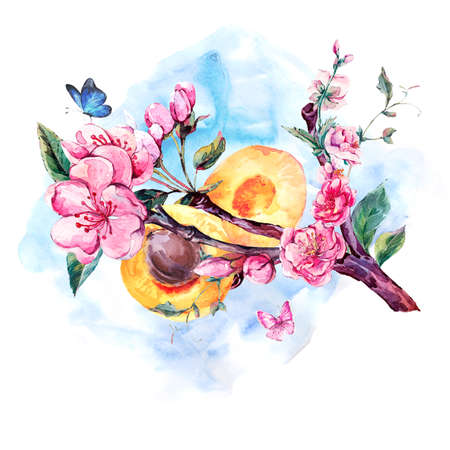 japanese apricot: Natural spring watercolor greeting card with fruits and flowers apricot tree branches, isolated decorative botanical illustration with flowers, and butterflies