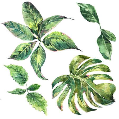 이국적인 수채화 녹색 열 대 나뭇잎, 식물, 자연 수집, 고립 된 그림의 여름 세트 등 스톡 콘텐츠