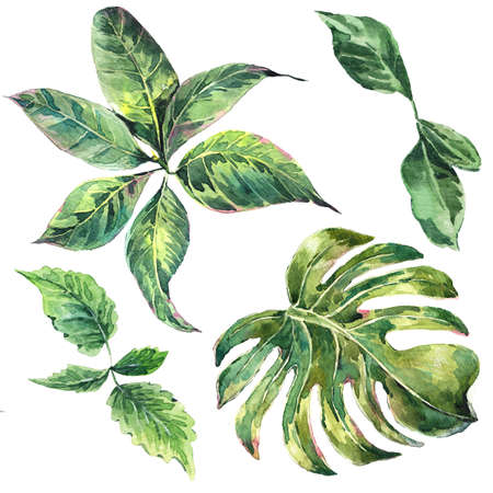 Summer set et of exotic watercolor green tropical leaves, botanical natural collection, isolated illustration Archivio Fotografico