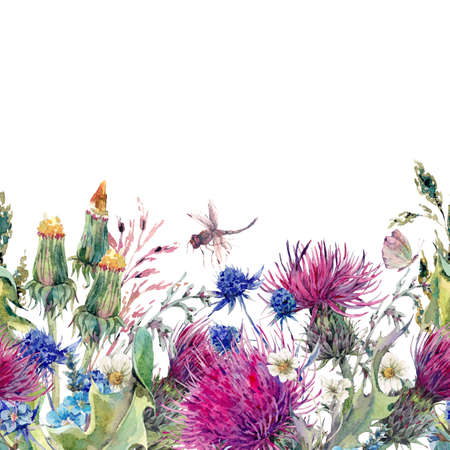 flower fields: Summer natural meadow watercolor seamless floral border with wild flowers, thistles, dandelions, meadow herbs, chamomile and a dragonfly. Botanical Vintage isolated watercolor illustration