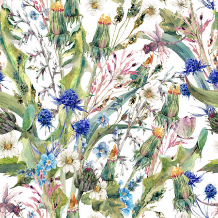 wild meadow: Summer natural herbal watercolor seamless floral pattern with wild flowers, thistles, dandelions, meadow herbs, chamomile and a dragonfly. Botanical meadow vintage watercolor pattern