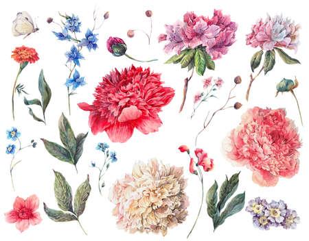 水彩の白、ピンク、赤の牡丹と庭の花、別の花、葉、小枝、白の分離の水彩イラストのセットです。自然夏デザイン花要素 写真素材