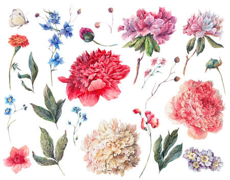 Set of watercolor white, pink, red peonies and garden flowers, separate flower, leaf, sprigs, isolated watercolor illustration on white. Natural summer design floral elements
