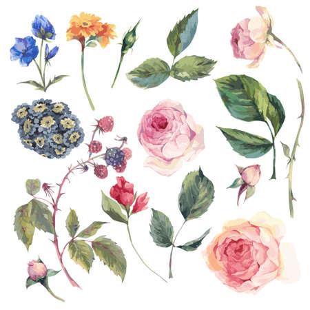 イングリッシュ ・ ローズのセット ビンテージ ベクトル要素葉枝花や野生の花、白い背景で隔離水彩イラスト