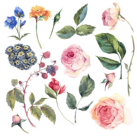 Set vintage vector elements of English roses leaves branches flowers and wildflowers, watercolor illustration isolated on white background
