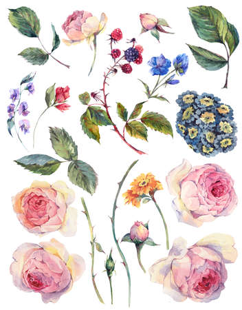 old english: Set vintage watercolor elements of English roses leaves branches flowers and wildflowers, watercolor illustration isolated on white background