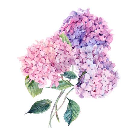 夏水彩ヴィンテージ花グリーティング カードに咲くアジサイ、水彩画植物自然紫陽花の図は、白で隔離