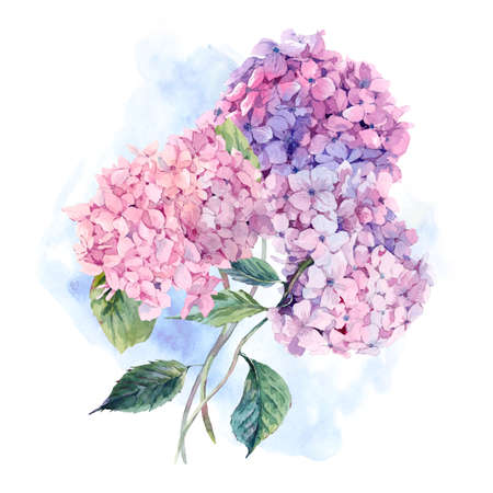 Summer Watercolor Vintage Floral Greeting Card with Blooming Hydrangea, Watercolor botanical natural hydrangea Illustration isolated on white Foto de archivo