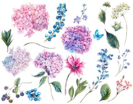 Stel vintage waterverf elementen van Blooming Hydrangea en tuin bloemen, bladeren takken bloemen en wilde bloemen, aquarel illustratie op een witte achtergrond