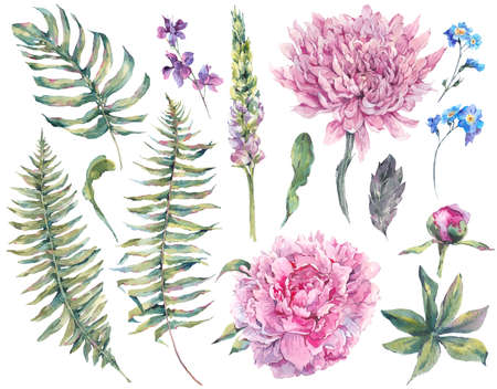 Set vintage watercolor elements of blooming peony, chrysanthemum, ferns, wild and garden flowers, watercolor illustration isolated on white background Foto de archivo